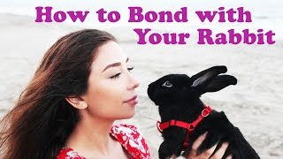 How to Bond with Your Rabbit