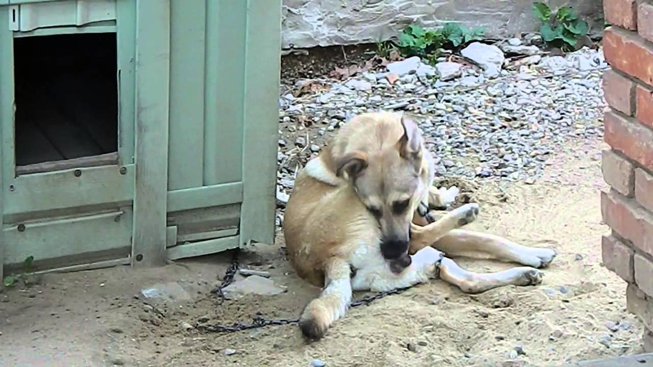 165Почему собаки зализывают раны человеку