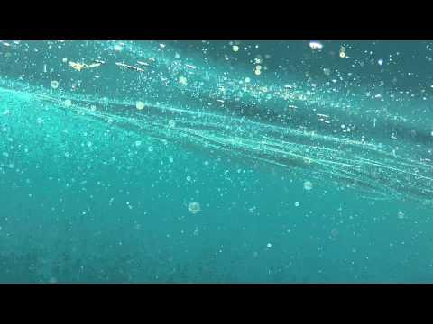 Ocean Plankton - the food of sea life
