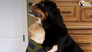 Kids and Dogs Growing Up Together | Animal Best Friend Compilation | The Dodo Daily