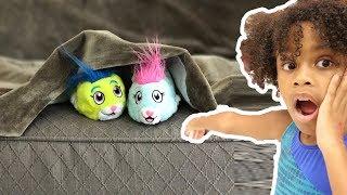 Hide & Seek  Playtime with ZhuZhu Pets