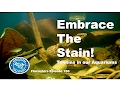 Embrace the Stain  - Tannins in Our Aquariums Episode 160