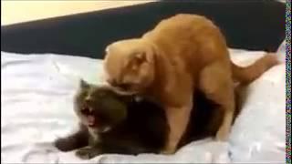 gato safado fazendo sexo