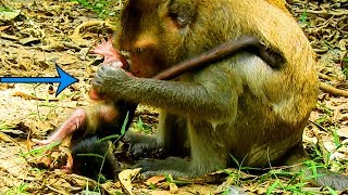 New Baby Cry and Cry Hard Cuz Mom Do Like This|So Poor, Pity New Born Baby Monkey Meet Mom Like That