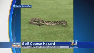 Trending: Snake Or Stick?