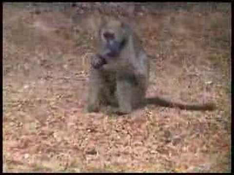 Zuid-Afrika, filmpje 2