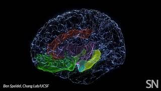 Brain areas involved in mood   Science News