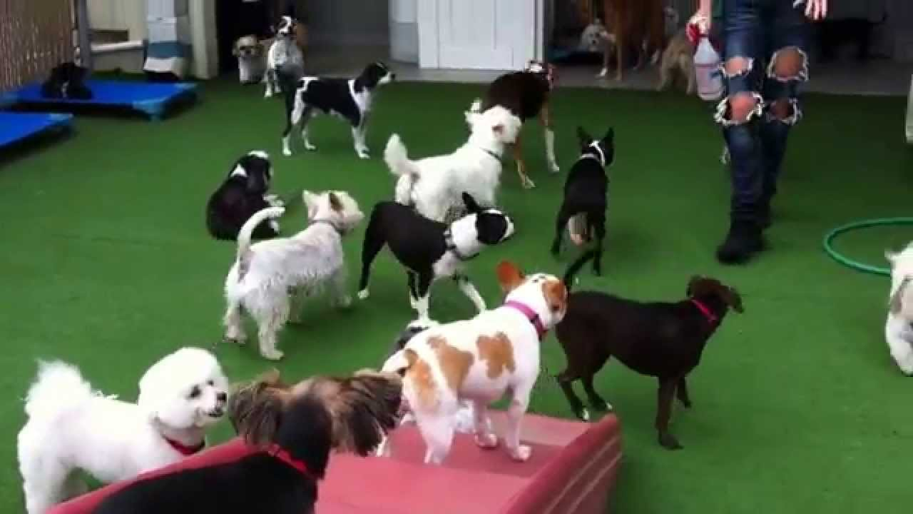 Pictures Of Dogs Playing That Doggie Day Care