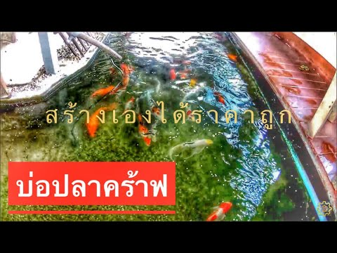 DIY. EP.17 สร้างบ่อปลาคร้าพ ราคาถูกด้วยอิฐบล้อค ทำบ่อกรองเอง Koi pond
