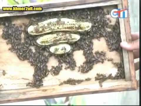 How to Raise Bee in Cambodia