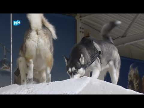Snowplanet in Spaarnwoude organiseert hondendag