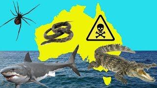 AUSTRALIA'S TOP 5 DEADLIEST ANIMALS