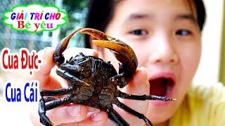 TRÒ CHƠI BẮT CUA PHÂN BIỆT CUA ĐỰC CUA CÁI | Jelajahi kepiting 💚 Giải trí cho Bé yêu