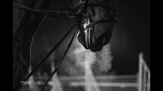 { Equestrians } This is our sport