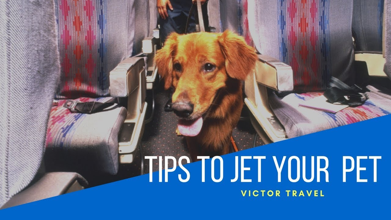 traveling with pets via american airlines Flying with your pet you will need airline pet policies for travel with a dog or cat for over 160 airlines find which airlines welcome pets.