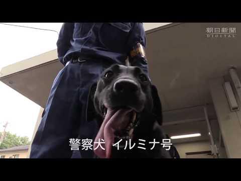 訓練に励む薬物捜索犬イルミナ号