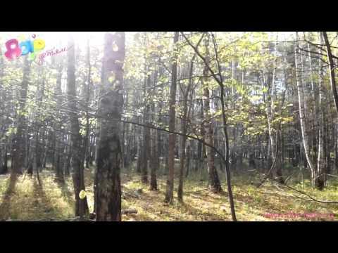 Орлятские песни - Падают листья