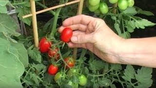 Bellandris – Gemüse aus eigenem Anbau