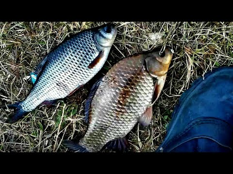 рыбалка в осиповичах вк