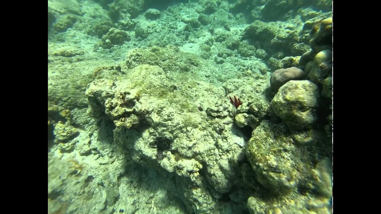 Hawaii 2 lava turtles and tropical fish youtube for Tropic fish hawaii