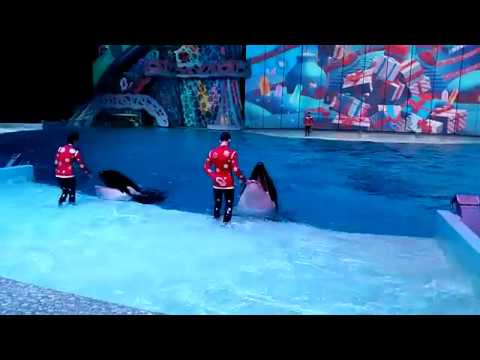 Москвариум на ВДНХ, косатки / Killer whales in Moscow oceanarium Moskvarium