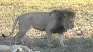 Duba Lion Sex 2--2014 88 18 Day 5