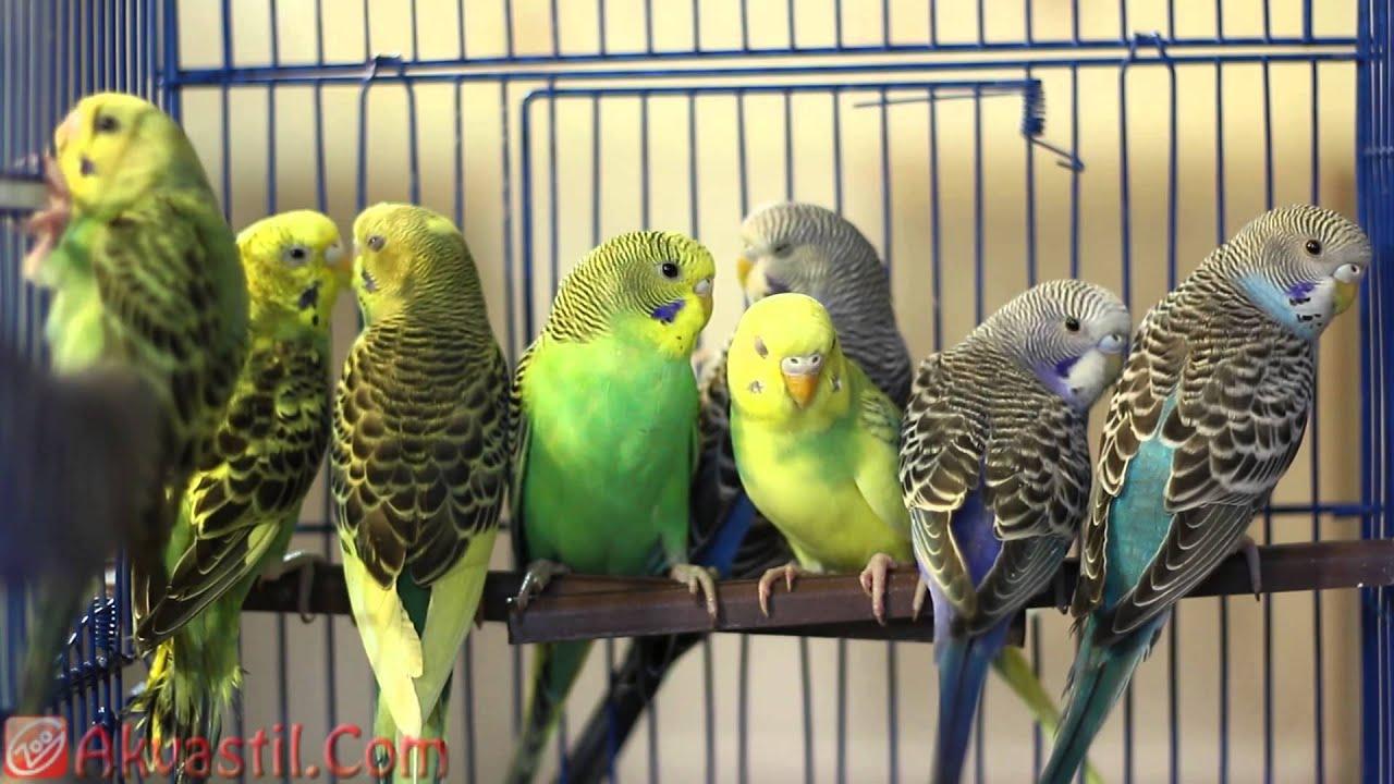 Смотри фото секс валнистава попугая 3 фотография