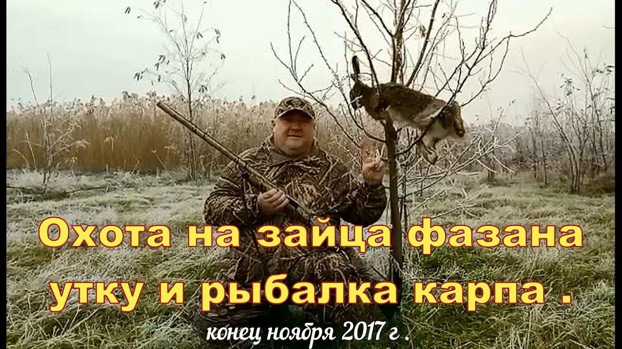 охота и рыбалка охота на зайца