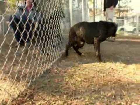 Ex Fighting Dog Rescue