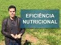 Como melhorar a eficiência nutricional dos bovinos