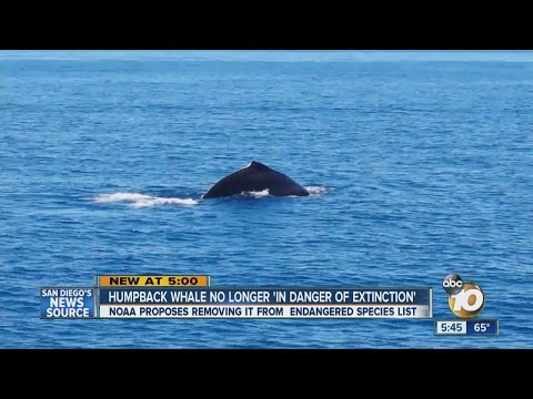 NOAA proposes removing humpback whales from endangered species list