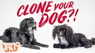 Clone Your Pet as a Stuffed Toy!