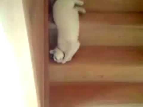 可愛的貓咪下樓梯