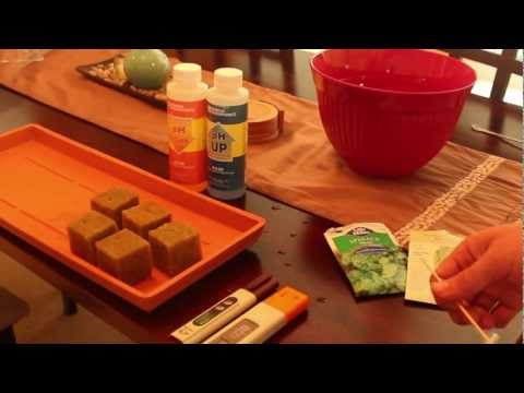 How To Start From Seed With Rockwool Cubes