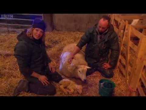 Lambing Live 2011 – Episode 1