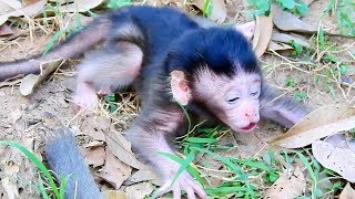 Poor Baby Monkey That Parents Abandoned - Alpha Jellyroll Take Care Newborn Baby Monkey