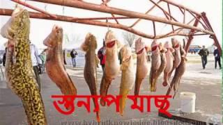 Download যে মাছ মানুষের মত মায়ের বুকের দুধ পান করে স্তন্নপায়ী মাছ 3Gp Mp4
