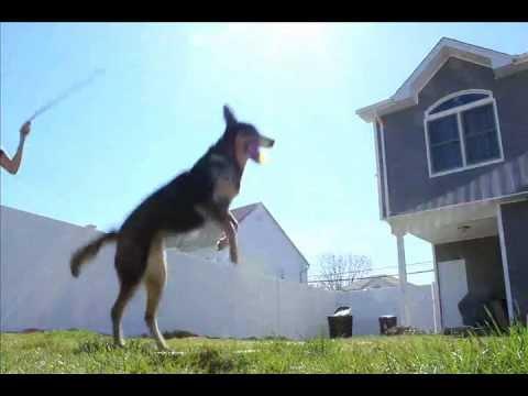 Perros - Saltando a la comba
