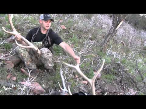 Tines Up Tuesday: Episode 7. Late Spring Elk Shed Hu