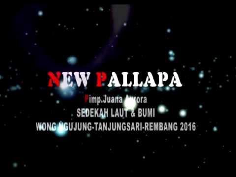 New Pallapa - Mimpi Terindah live ngujung tahun 2016
