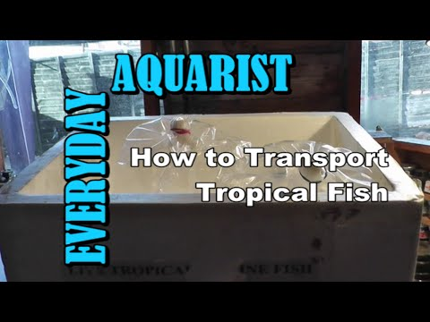 Moving house and transporting tropical aquarium fish - YouTube