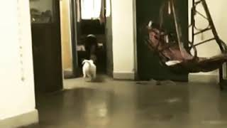 Noah teaching Luna to jump down. Funny Dog video