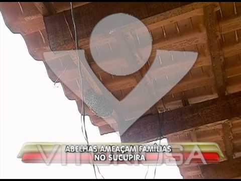 Abelhas ameaçam famílias no bairro Sucupira
