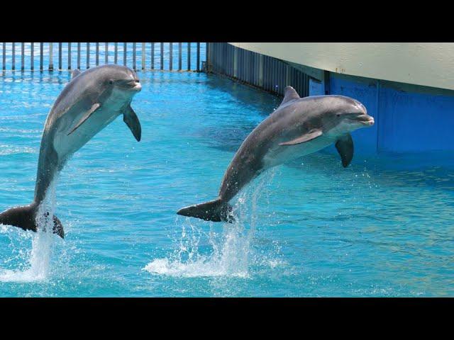 Un gato que juega con varios delfines