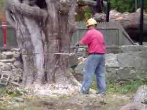 Thurston Cemetery Tree Removal, Hopkinton, R.I., Video #5 of #5 Videos.