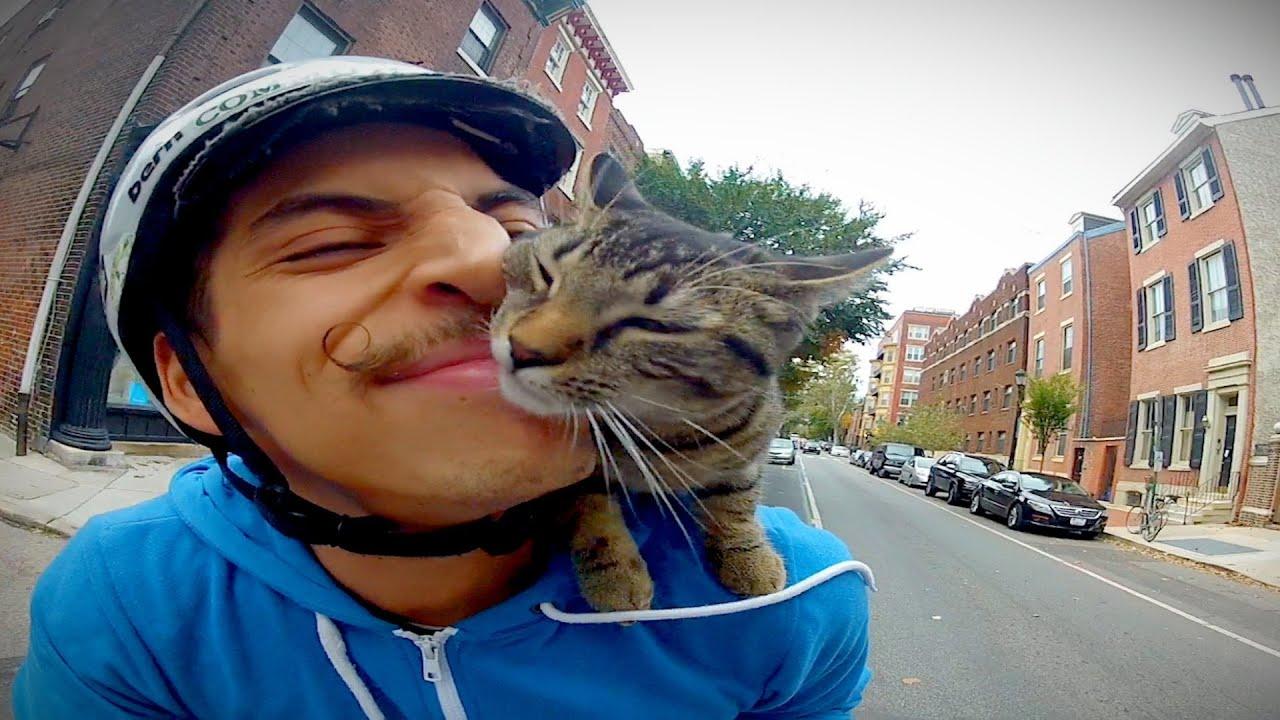 El éxito de las GoPro con gatos
