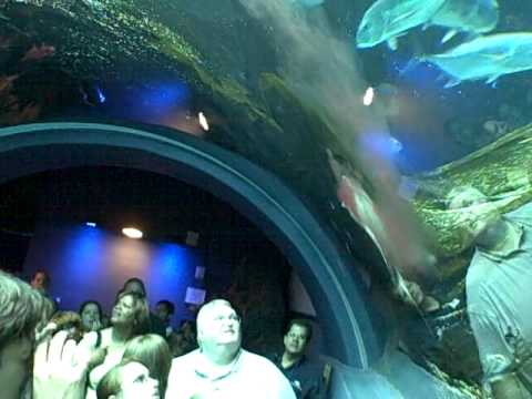 Death at the Georgia Aquarium pt.1