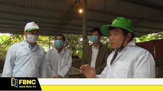 Việt Nam vào cuộc chế tạo vắc xin phòng dịch tả lợn châu Phi | Bản tin FBNC TV 21/5/19