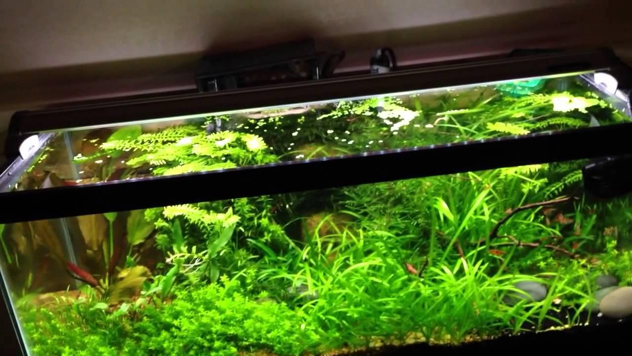 New Finnex Fugeray Planted Plus Led Light Youtube