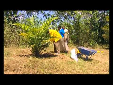 Series 1-Episode 6 [Shamba Shape Up Episode 6], Scene 1
